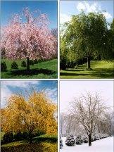 four-seasons